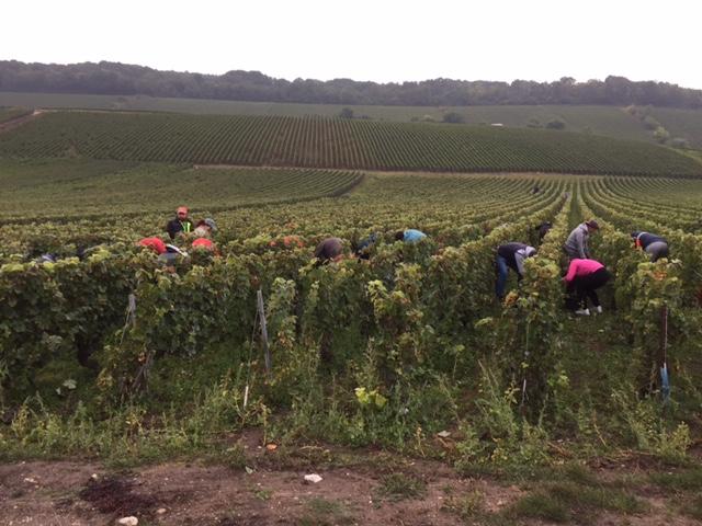 harvest-2016