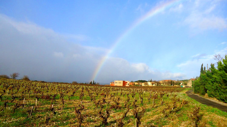 rainbowvineyard